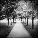 Row of Trees in a Park