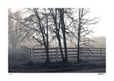 Fenced Fog
