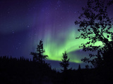 Aurora Borealis Above the Trees  Northwest Territories  Canada