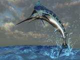 A Blue Marlin Flashes Its Iridescent Colors As It Bursts from the Ocean