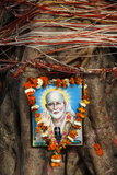 Garlanded Shirdi Sai Baba Picture on a Sacred Tree