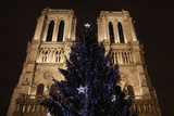 Christmas Tree Outside Notre-Dame of Paris Cathedral