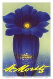 St Moritz  Schweiz (Switzerland) - Blue Trumpet Gentian Flower