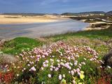 Armeria Pungens Blossom Costa Vicentina Nature Park  Portugal  Wild Atlantic Coast in Europe