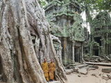 Cambodia  Siem Reap  Angkor  Ta Prohm Temple