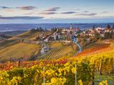 Vineyards  Treiso  Nr Alba  Langhe  Piedmont (or Piemonte or Piedmonte)  Italy