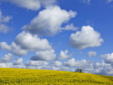 England  Hampshire  Rape Fields and Clouds