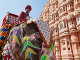 India  Rajasthan  Jaipur  Ceremonial Decorated Elephant Outside the Hawa Mahal  Palace of the Winds