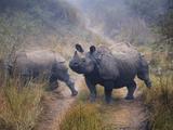 Nepal  Chitwan National Park  Rhino (Rhinoceros Unicornis)