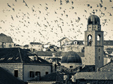 Croatia  Dalmatia  Dubrovnik  Old Town (Stari Grad)  Clock Tower Surrounded by Birds
