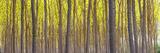Woods  Tuscany  Italy