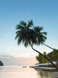Caribbean  St Lucia  Marigot  Marigot Bay  Marigot Bay Beach Club Hotel  Doolittle's Restaurant