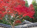 Japan  Kyoto  Arashiyama  Autumn Leaves