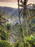 Indonesia  Bali  Ubud  Landscape Around the Campuhan Ridge Walk