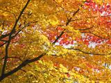 Japan  Kyoto  Arashiyama  Adashino Nembutsu-ji Temple  Autumn Leaves