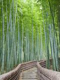 Japan  Kyoto  Arashiyama  Adashino Nembutsu-ji Temple  Bamboo Forest