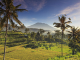 Indonesia  Bali  Sidemen  Rice Fields and Gunung Agung Volcano