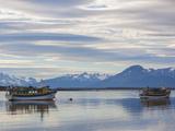 Chile  Magallanes Region  Puerto Natales  Tour Boats on Seno Ultima Esperanza Bay