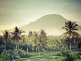 Indonesia  Bali  East Bali  Amlapura  Rice Fields and Gunung Agung Volcano