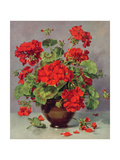 Geranium in an Earthenware Vase