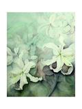 Lilies  White Auratum