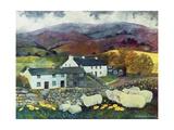 Sheep Country  1988