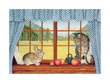 Rimrock Cottontail  1993