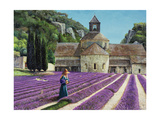 Lavender Picker  Abbaye Senanque  Provence