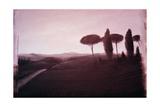 Tuscan Landscape  1992