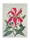 Botanical Lily  1996