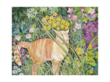 Cat and Long Grass  1996