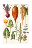 Beetroot and Other Vegetables