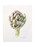 Artichoke Study, 1993 Reproduction d'art par Alison Cooper