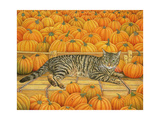 The Pumpkin-Cat  1995