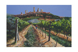 Grape Vines  San Gimignano  Tuscany  1998