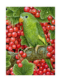 Redcurrant-Parakeet  1995