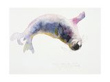 Young Grey Seal  Gweek  2003