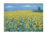 Field of Sunflowers  2002