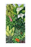 Foliage I  2003