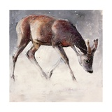 Roe Buck  Winter  2000