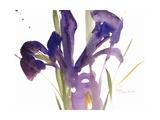 Iris  1987