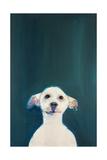 Naked Dog 6  2009