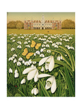 Snowdrop Day  Hatfield House  1999