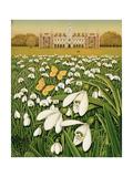 Snowdrop Day  Hatfield House  1999