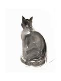Cat  1985