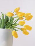 Yellow Tulips I  1999
