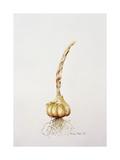 Onion  1998
