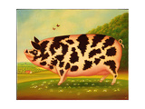 Old Spot Pig  1998