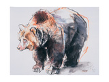 European Brown Bear  2001