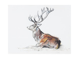 Seated Stag  2006